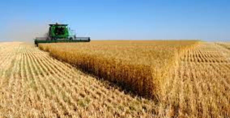 Казахстанские фермеры опасаются дефицита зерна
