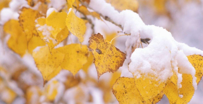 Снег ожидается на севере и востоке Казахстана в ближайшие дни