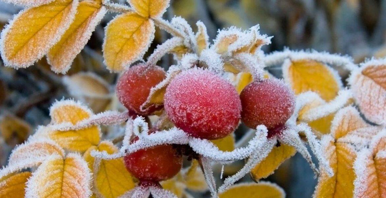 Ночью в Казахстане прогнозируют заморозки