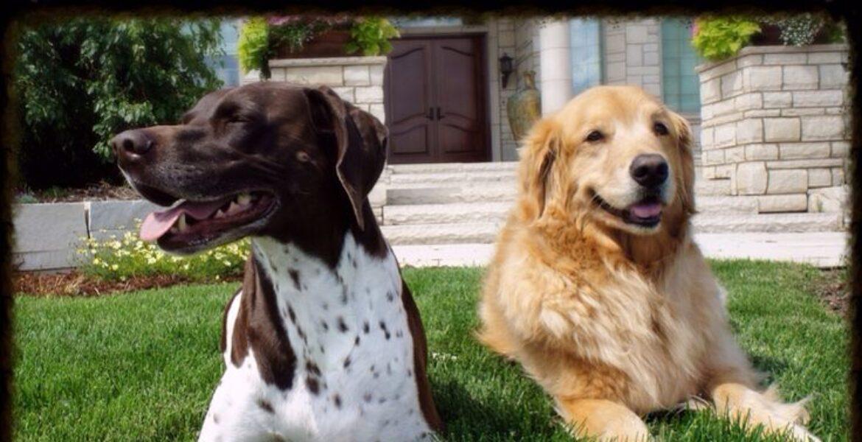 В Бразилии суд признал право двух собак на моральную компенсацию от хозяев