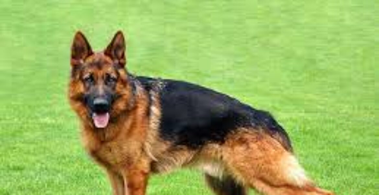 Собака нашла потерявшегося двухлетнего ребенка в Нур-Султане (видео)