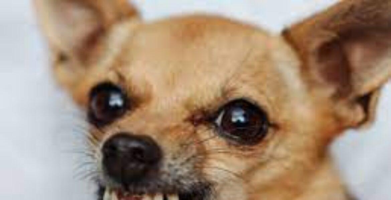 Ты — не ты, когда голоден: пес «атаковал» свой завтрак — «страшно» забавное видео