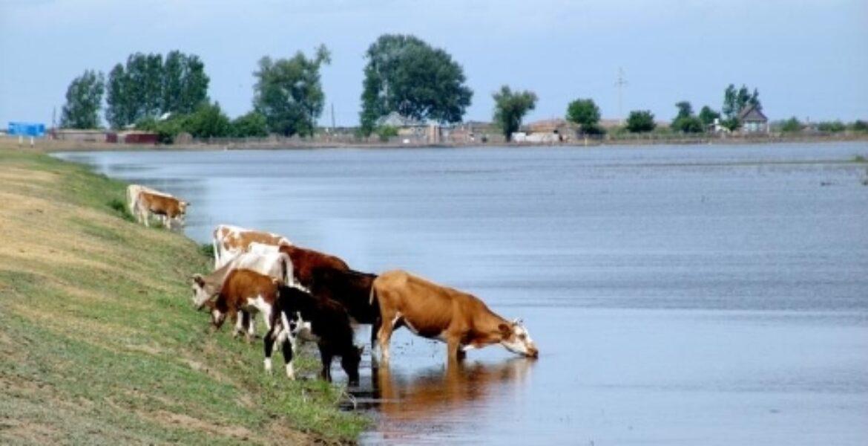 «Пьем из канала вместе со скотом» — село на юге Казахстана страдает от отсутствия воды