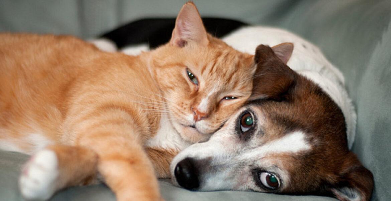 Употреблять в пищу кошек и собак запретят в Казахстане