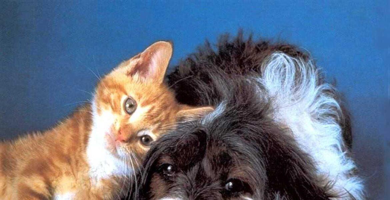 Владельцев домашних животных обяжут ставить их на учёт, вовремя лечить и стерилизовать