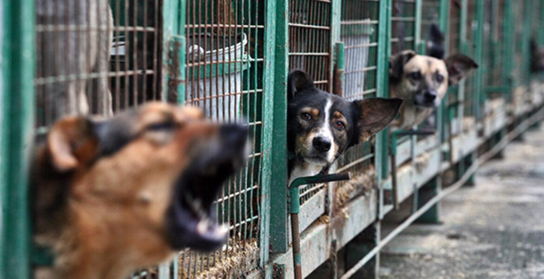 Требования к приютам для животных разработали в Казахстане